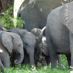 Parque Kruger - Elefantes