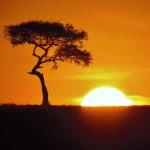 Maasai Mara - Sunrise