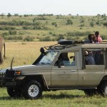 Sarova Game Camp - Game Drive