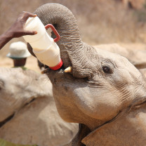 Quênia - Orfanato de Elefantes / Foto: Richard Probst
