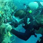 Passeio - Mergulho e Conservação Marinha