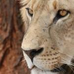 Safári no Parque Kruger